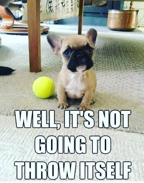 14 French Bulldog Memes That Will Make Your Day Petpress