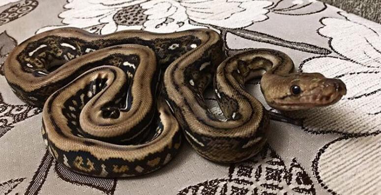 Best Female Snake Name...