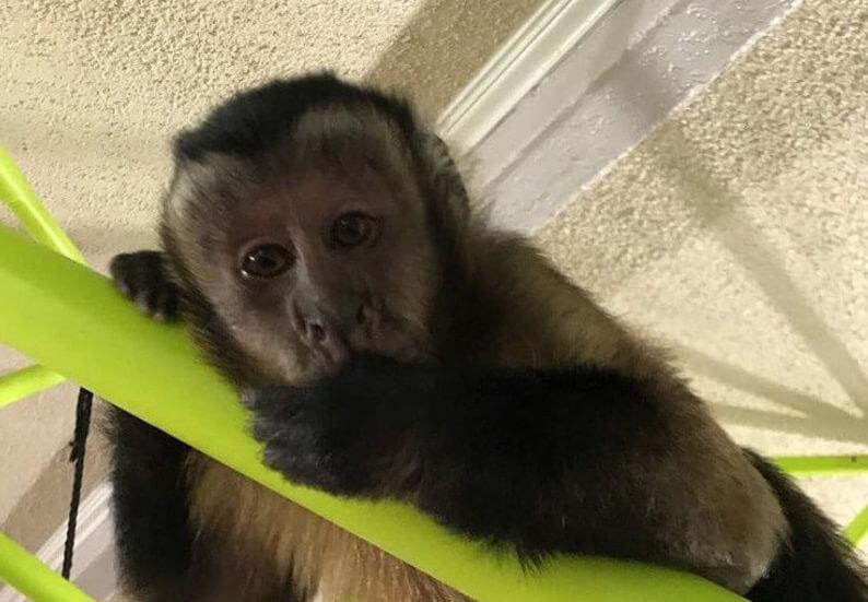 200 Best Pet Monkey Names Cute Cool