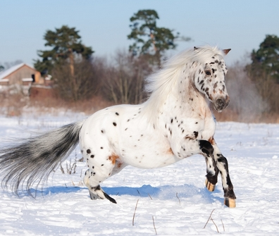 Top 100 Best Appaloosa Horse Names For Any Taste Petpress