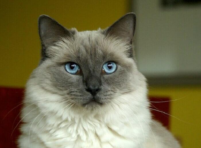 Native American Cat Names 140